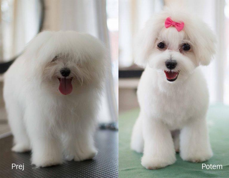 Kužek pred in po striženju