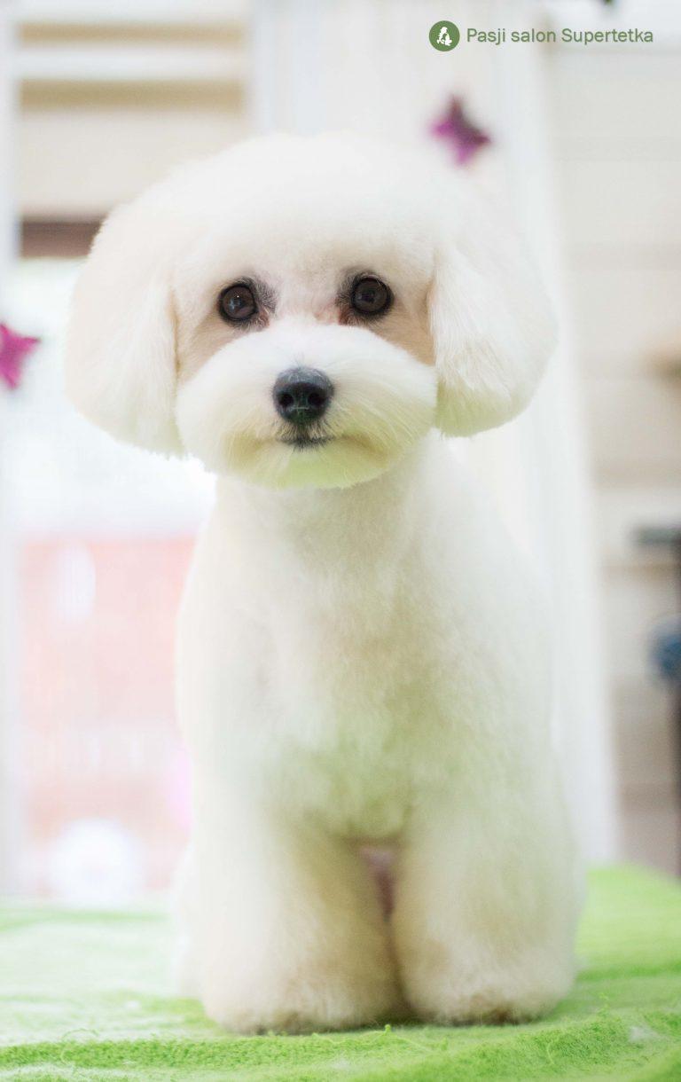 Coton pri pasjem frizerju