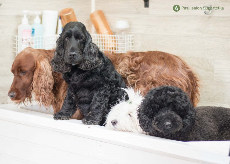 Kužki v pasjem salonu na kopanju